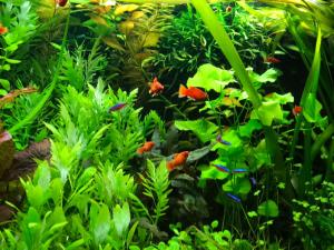 aquarium plaatsen