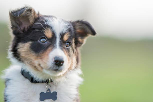 Een puppy training zorgt voor een leuke en gezellige hond